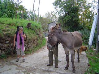 Rencontre d'un ânier à La Faba